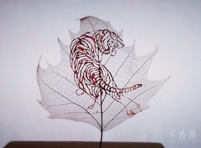能和金叶子相提并论的树叶,大概就只有这个了