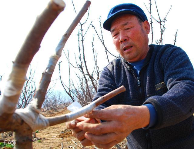这位农村大叔真厉害,一棵树竟然结14种水果!