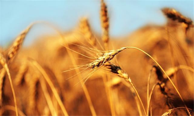 印度农业电商平台BigHaat获种子轮融资,直接对接农民与种子供应商