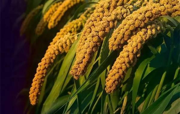 农业部门提醒:要买好种子 请到正规店