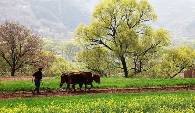 今日国内化肥价格