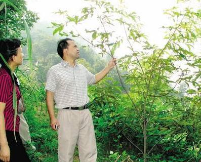 中國農民最適合種的7種堅果樹,易種植、賺錢多