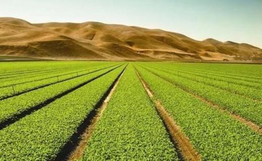 未来中国农业的方向、智慧农业、生态农业、创意农业