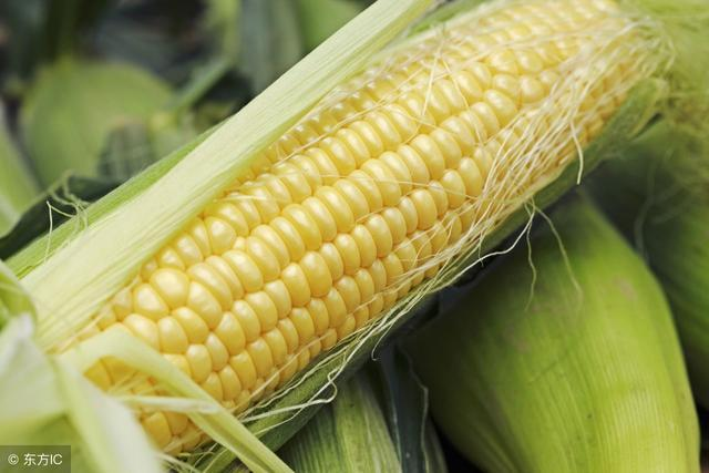 老农经验之谈,玉米怎么选种,才能让收益翻倍?