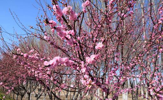 春暖花开季——落垡晓哥摄影