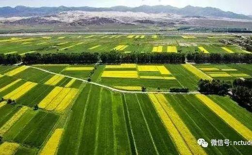 未来农村种植的五个发展趋势,想赚钱就赶紧行动!
