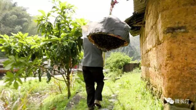 """长汀县四都镇:发展野蜂产业 品尝甜""""蜜""""生活"""