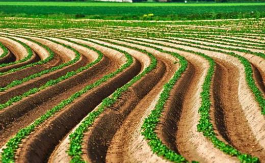 农村土地流转到底富了谁?
