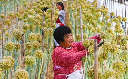 武强:打造现代农业园区 助力乡村振兴
