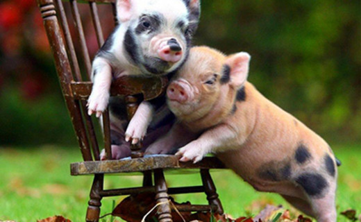 专家共商后非洲猪瘟时代养猪产业发展战略