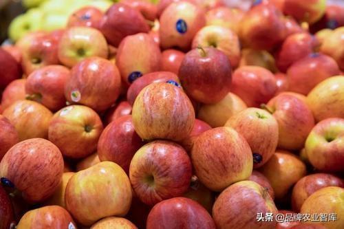 苹果27600斤/亩,原来他们这样种苹果的