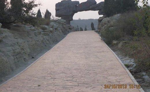 南陈乡树化石山