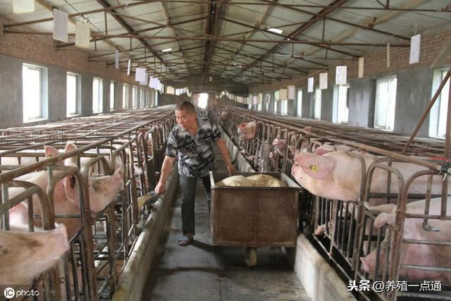 2019.09.10,多部门扶持密集释放,养猪可期,规模场最高补500万