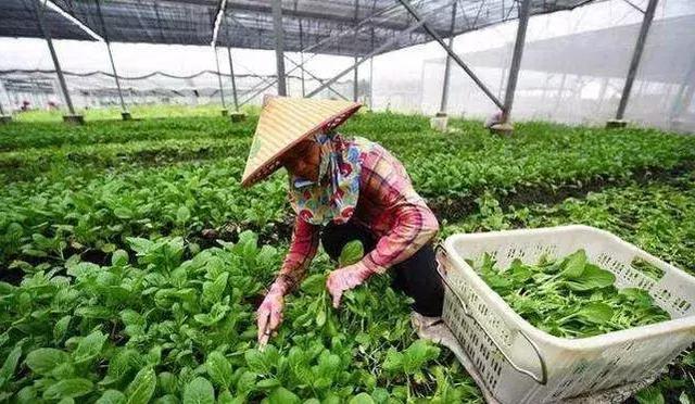 9-12月种植什么蔬菜最赚钱?建议收藏