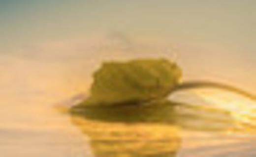 浓情暖意 奉献师生 珠海合兴控股集团慰问团与长坪乡 党政领导、师生共庆第35个教师节