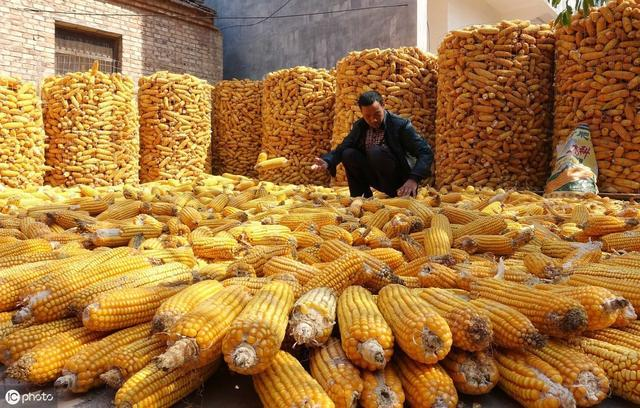 今年玉米还会持续上涨吗?