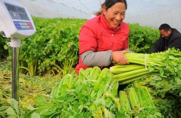 我国农产品屡屡滞销,国外每年不愁卖,问题到底出在哪里呢?
