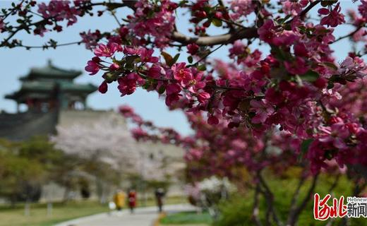 【云上赏春】河北:姹紫嫣红春光媚