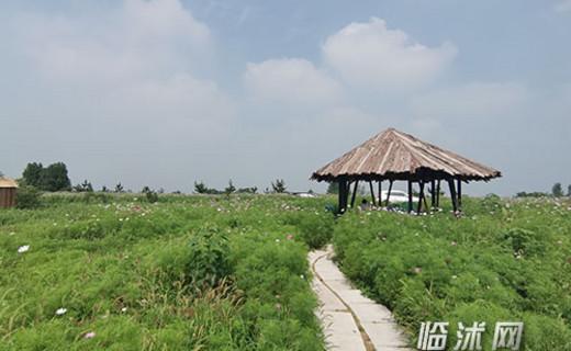 曹庄镇生态旅游促进乡村振兴