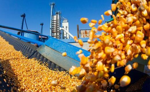 玉米、小麦、大豆等粮价上涨,地租跟涨50%,谁受益?谁买单?